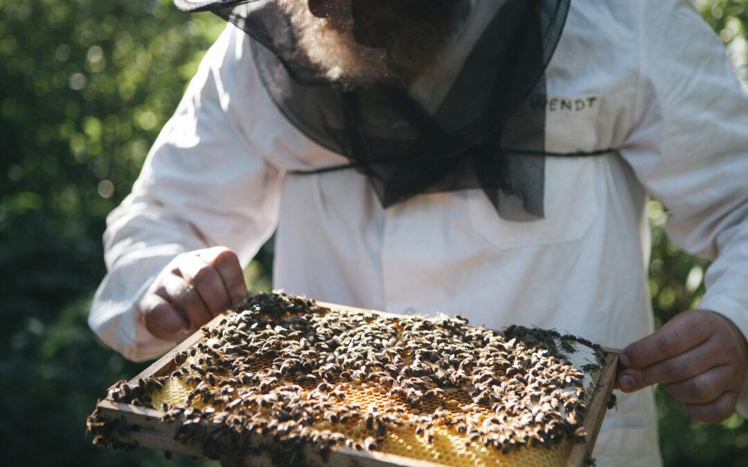 Fleißig wie die Bienen: IMV unterstützt PROJEKT 2028